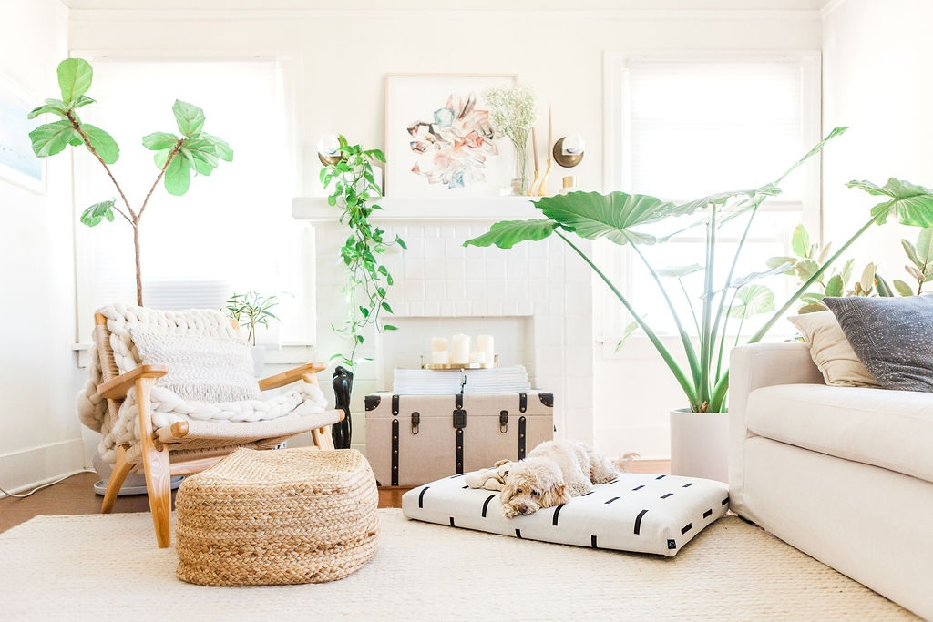 Bohemian dog bed with dog sleeping on it in bright living room with plants